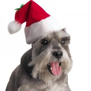 A Christmas Schnauzer