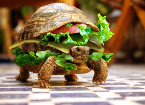 Hamburgers and Turtles: Skipping the Gender Reveal