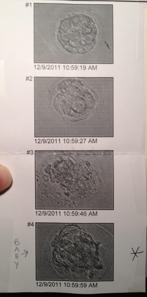 2011embryos