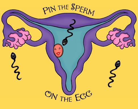 vagina-fuck-tricks-to-help-the-sperm-reach-the-egg