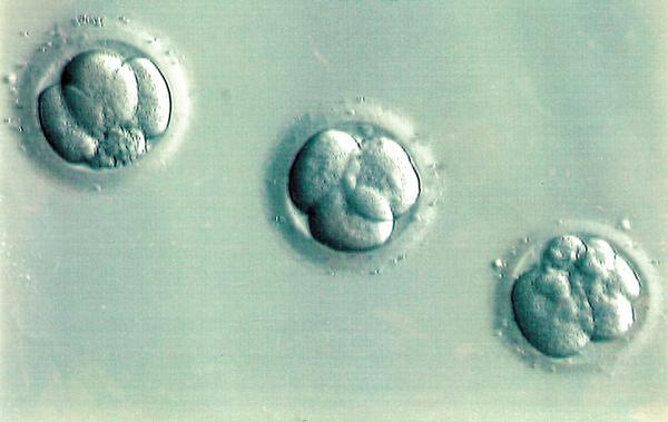 Giving up our embryos