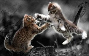 The Pregnancy Duel: Peanut vs. Squeak
